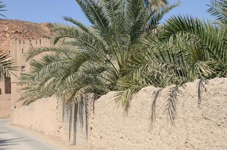Oman - Birkat Al Mawz