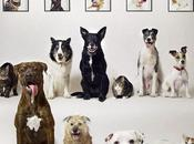 Homeless Dogs Immortalized Stamps!