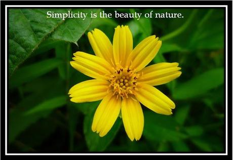 Images about Simplicity