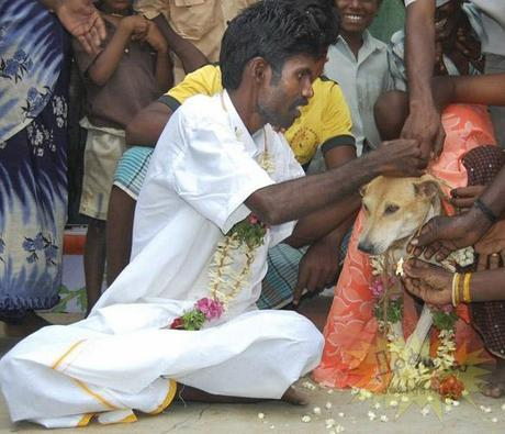Indian Farm Laborer Marries Stray DOG!