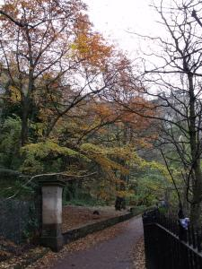 Autumn leaves on the Water of Leith, Edinburgh