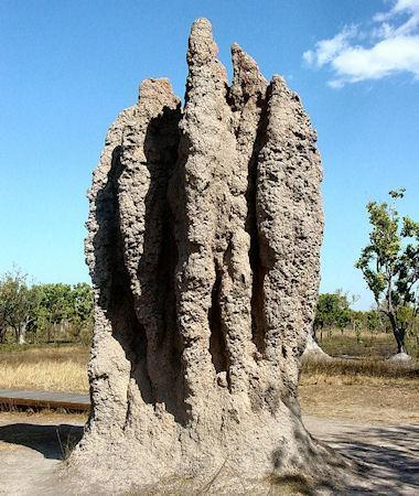 Miraculous Termite Mounds