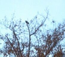 Saw A Bald Eagle On My Run Today