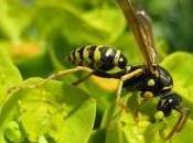 Featured Animal: Wasp