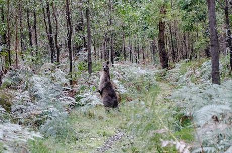 wallaby standing upright on walking track