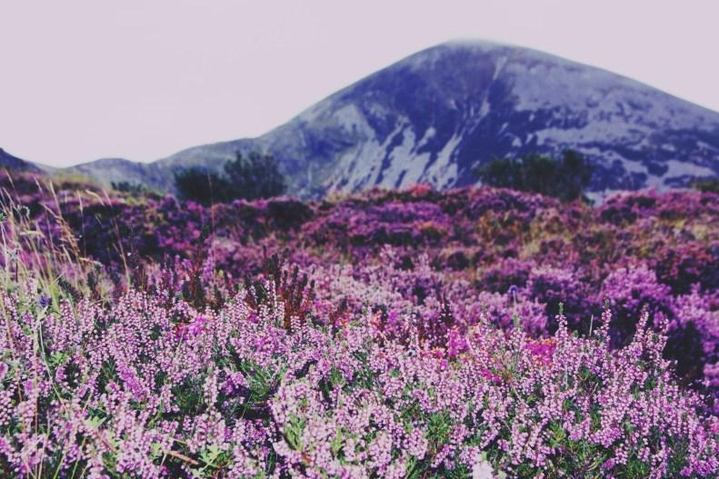Beautiful days: flowers and mountains
