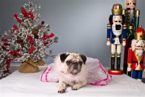 Paws De Deux: Therapy Dogs Perform 'Nutcracker'