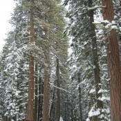 Entering Lassen National Forest