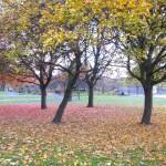 Trees in Barnsbury Park