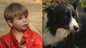 Family Dog Finds Missing Toddler