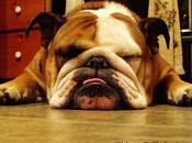 Artist, Bulldog