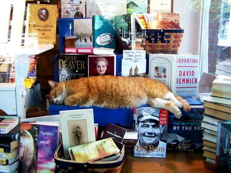 orange cat in the bookstore window; East Hampton NY; BookHamptons