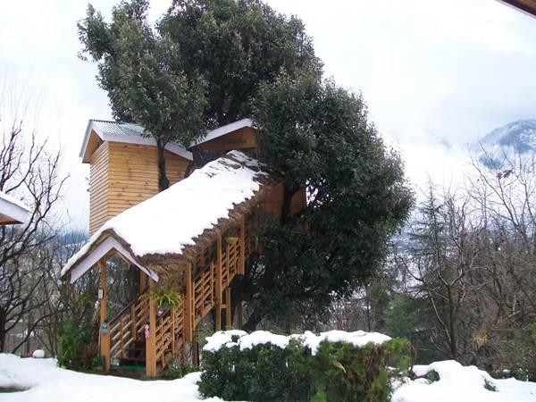 Tree House Cottage in Manali