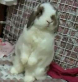Hero rabbit saves owners from deadly gas leak