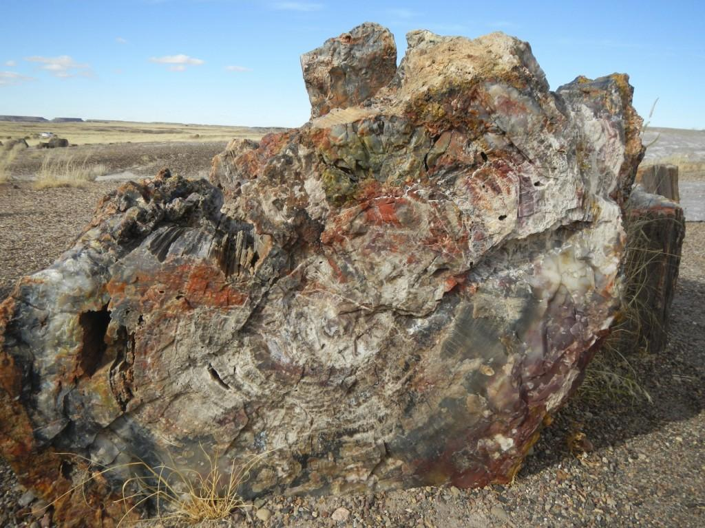 Close up of Petrified logs in the Petrified Forest Arizona