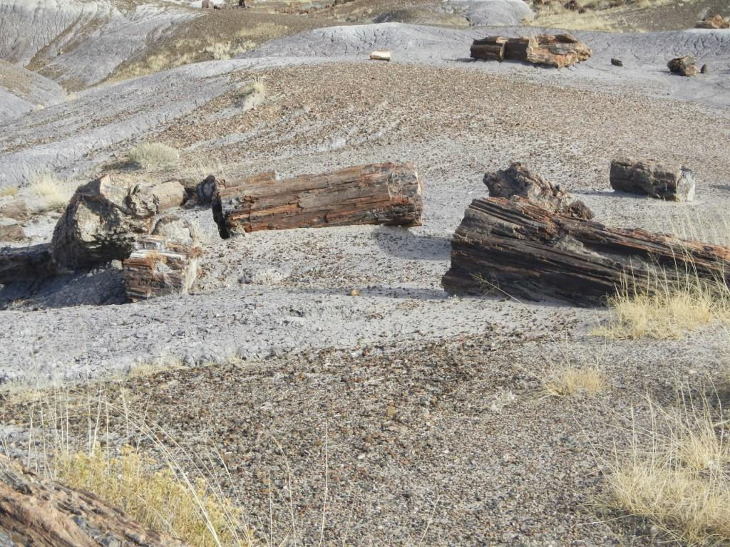 Logs Strewn about in the Petrified Forest Arizona