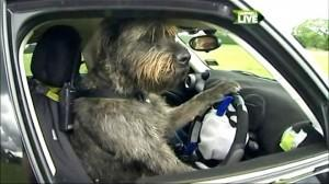 Trainers Teach Dogs to Drive Cars