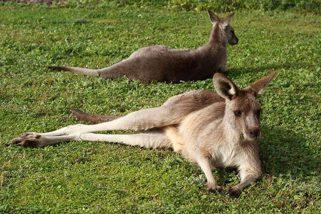 Top 5 Australia experiences