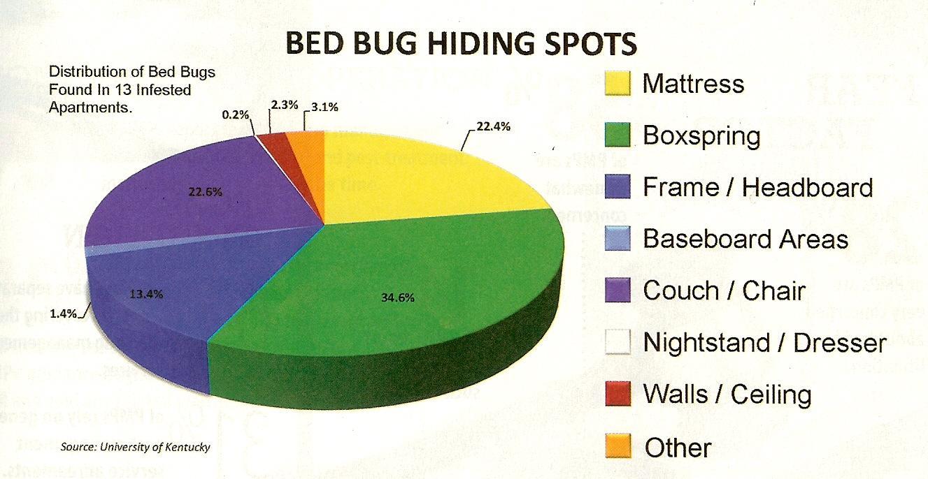 My Bedroom Has Bed Bugs