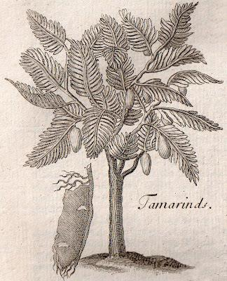 Charles Carter's 1730 Prunella and Tamarind Tort