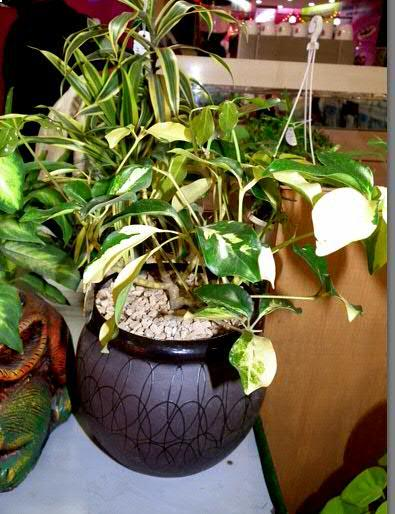 SSU Home : Beautiful Indoor Plants and Pots for Your Home