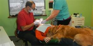 This dog can even make a trip to the dentist bearable