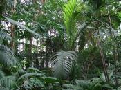 Tropical Rainforest Greenhouse Jardin Plantes