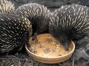 Melbourne Healesville Animal Sanctuary, Melbourne, Australia