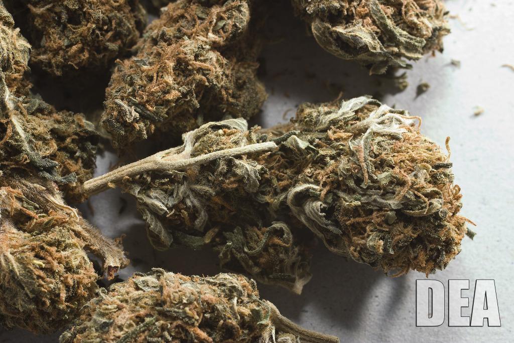 marijuana-003