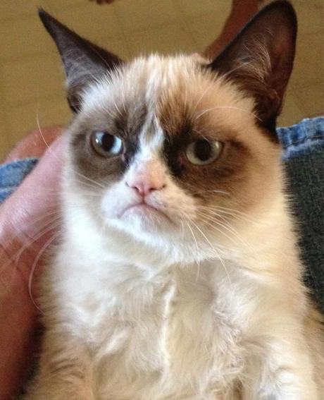 I have no more relevant images so here is a grumpy cat, reflecting my annoyance at the lack of colourful pictures in the research.