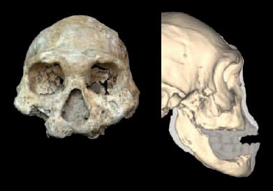 Caring Homo erectus