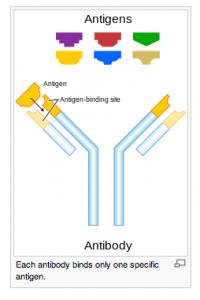 Monoclonal Antibodies (Part 2)