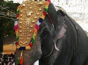Cochin Carnival 2012-2013 Fort Kochi