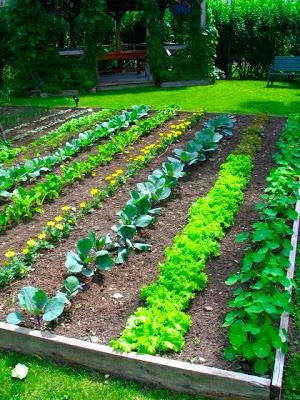 Grow Backyard Garden Planning Tips Paperblog