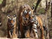 Discover Wildlife India