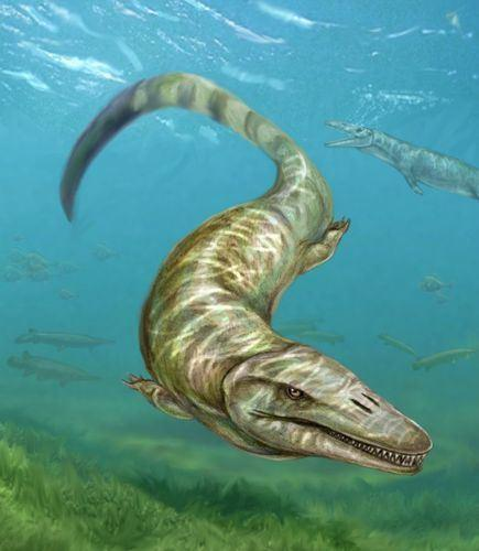 new-deep-sea-mosasaur-species-found_62555_600x450