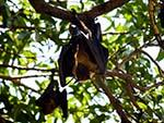 Bats in the trees on shore near the boats