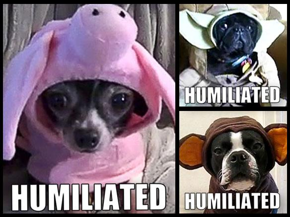 Quite Possibly the Most Humiliated DOGS in Costume