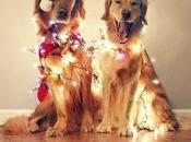 Find Christmas Awkward