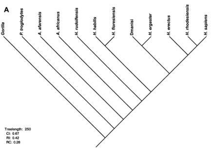 The family tree the cladistic analysis came up with
