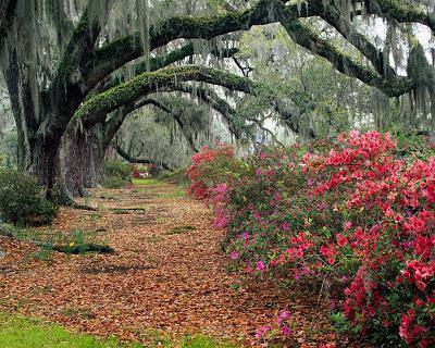 Nature Photography Photos