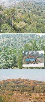 Palm Oil Resources