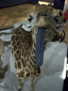The Giraffe, National Museum of Scotland, Edinburgh