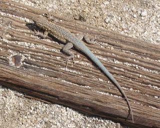 ANZA BORREGO STATE PARK, California:  Desert Wildlife and More