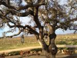 """""""Hair of the Dog"""" – a New Year's Day Tradition at Cass Winery in Paso Robles"""
