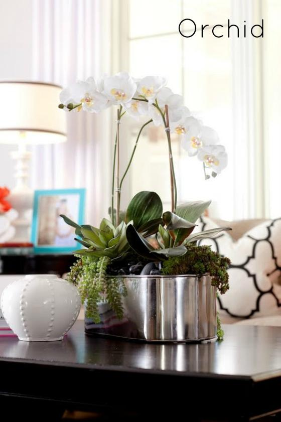 NookAndSea-White-Orchid-Flower-Home