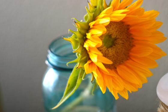Nook&Sea-Blue-Mason-Jar-Antique-Yellow-Sunflower