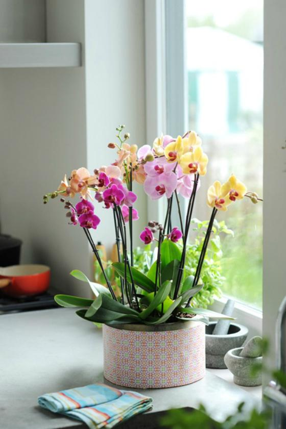 NookAndSea-Orchid-Flowers-Vase-Purple-Yellow-Pink-Orange-Counter-Kitchen-House