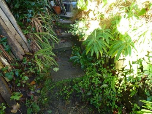 narrow path leading to greenhouse