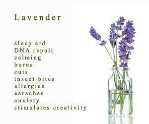 photo by Jenny Stone; www.trydoterra.com/lavender-essential-oil